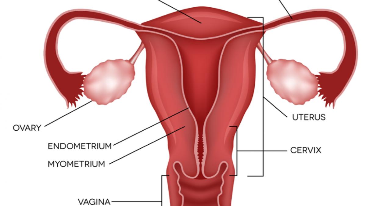 endometrium rák gp)