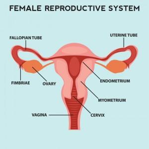 Hidden dangers of undiagnosed uterine sarcoma professor andreas incidence ccuart Images